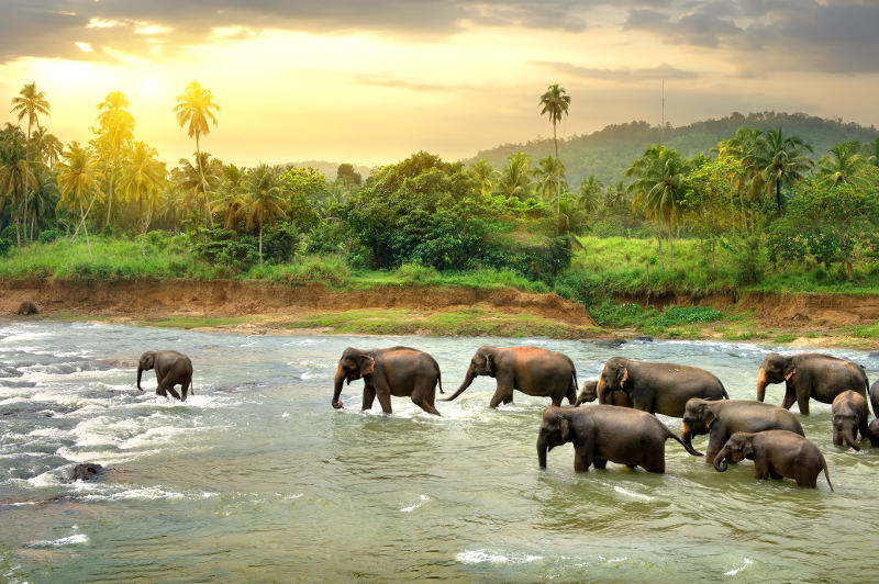 elephants running in river