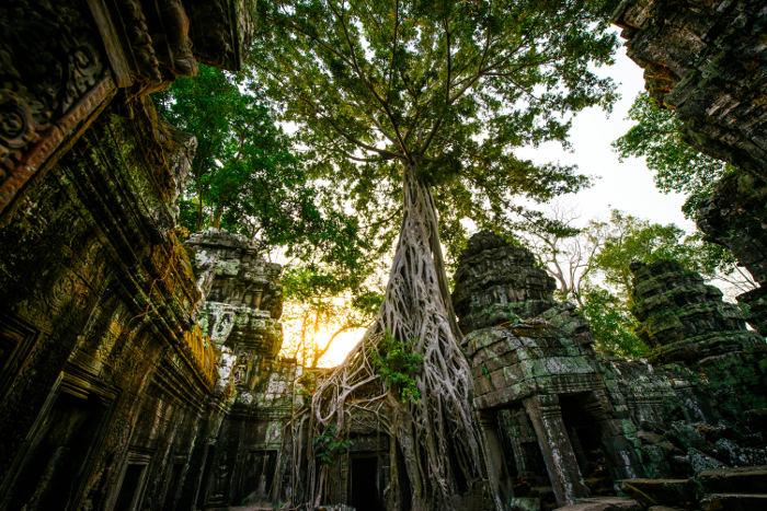ta prohm temple cambodia tomb raider temple
