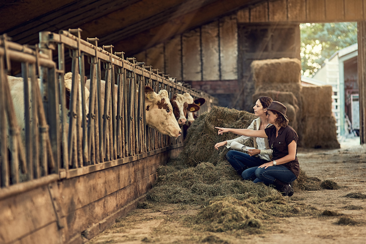 two girls inspect cows on a farm