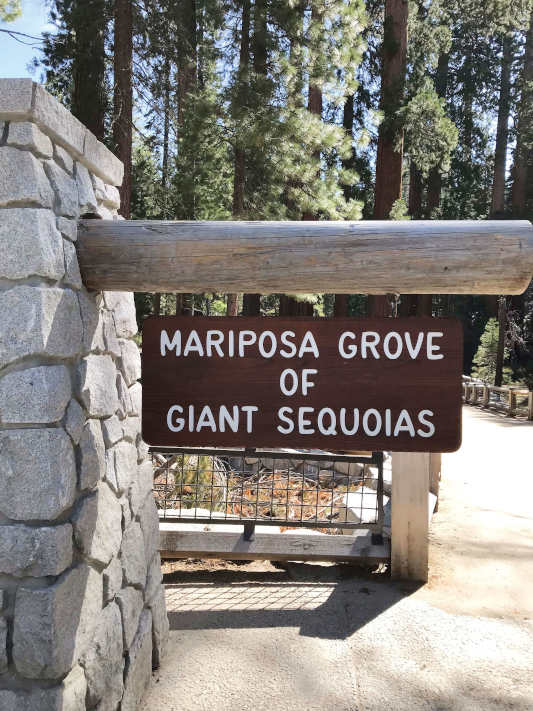 """A wooden sign that reads """"Mariposa grove of giant sequoias"""""""
