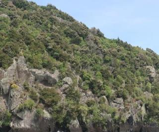 Maori rock carvings